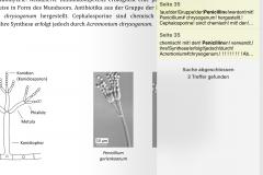 GoodNotes PDF durchsuchen