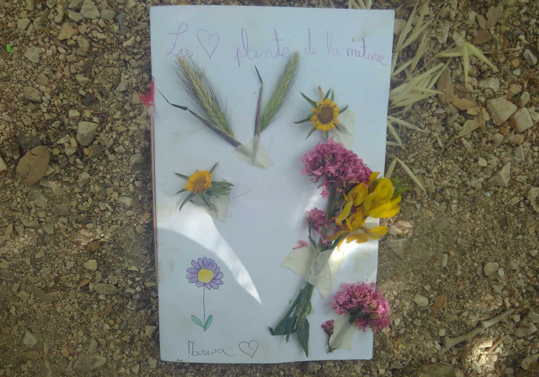 Titelbild eines Herbariums mit aufgeklebten Blumen
